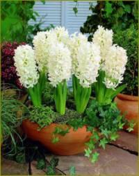 Která okrasná květina je na fotografii č.3? (náhled)