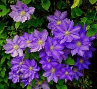 Jak se jmenuje okrasná rostlina na fotografii č.8? (náhled)