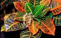 Název pokojové rostliny na obrázku č.9 je: (náhled)