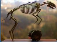 Jakému živočichovy patří tento kosterní pozůstatek? (náhled)