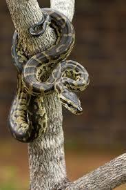 co je tohle za hada