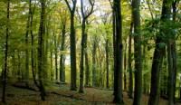 Kůra z jakého stromu je ideální na rozdělávání ohně?  (náhled)