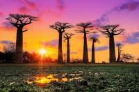 Jaké je rodové jméno exotického stromu na fotografii č.15, který se vyskytuje jen v některých oblastech na Zemi? (náhled)