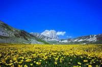 Jak se jmenuje nejvyšší hora za horskou loukou na fotografii č.11? (náhled)