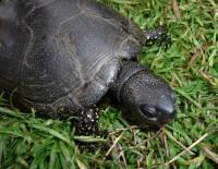 Jaká želva je na obrázku č. 10? (náhled)