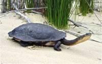 Jaká želva je na obrázku č. 11? (náhled)