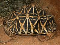 Jaká želva je na obrázku č. 3? (náhled)