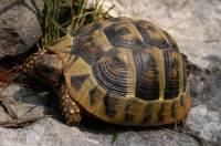 Jaká želva je na obrázku č. 4? (náhled)