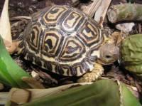 Jaká želva je na obrázku č. 5? (náhled)