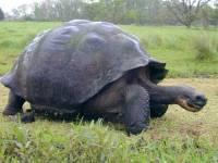 Jaká želva je na obrázku č. 6? (náhled)