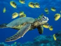 Jaká želva je na obrázku č. 7? (náhled)