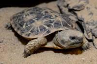Jaká želva je na obrázku č. 9? (náhled)