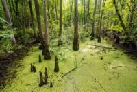 Jak se nazývá bažinatý biotop v jižní části Floridy? (náhled)