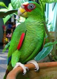 Jaký papoušek je na obrázku č. 16? (náhled)