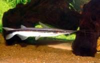 Která ryba je na obrázku č. 5? (náhled)
