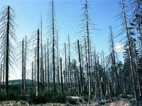 Co se neblaze podepsalo na stavu (nejen) Jizerských hor v 80. letech 20. století? (náhled)