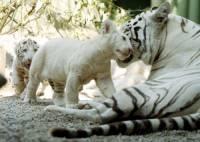 Je pravda, že je liberecká zoo nejstarší v ČR? (náhled)