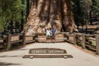 Ve kterém NP jsou největší stromy na světě? (náhled)
