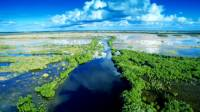 Jak se nazývá NP v Jižní části Floridy, který je tvořen mokřady? (náhled)