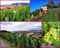 Jak se jmenuje vinohrad na fotografii č.22, který je v bezprostřední blízkosti Pražského hradu? (náhled)