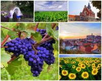 Jak se jmenuje jedna ze čtyř nejúrodnějších oblastí ČR na obrázku č.4? Rozkládá se při toku významné řeky ČR a proslula pěstováním vinné révy. (náhled)