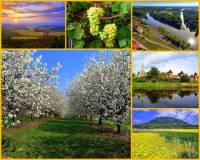 Jak se jmenuje jedna ze čtyř nejúrodnějších oblastí ČR na fotografii č.8? Rozkládá se při toku významné řeky ČR a díky kvalitní půdě a velmi dobrým klimatickým podmínkám se zde daří vinné révě, ovocným sadům a plantážím s jahodami, zeleninou a obilí. (náhled)