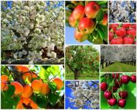 """Ve kterém kraji v ČR se rozkládá velmi úrodná a teplotně nadprůměrná oblast na fotografii č.16, které se říká """"Zahrada Čech""""?  Daří se zde i ovoci a rostlinám náročnějším na teplé podnebí. (náhled)"""