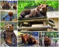 """Město, ve kterém ve zdejším medvědáriu na fotografii č.8 našli svůj domov medvědí bráškové známí z Večerníčku """"Méďové"""". se jmenuje: (náhled)"""