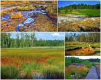 Poblíž kterého města se nachází národní přírodní rezervace SOOS na obrázku č.13? SOOS = rozsáhlé rašeliniště a slatiniště, kde vyvěrá velké množství minerálních pramenů a čistý oxid uhličitý v bahenních sopkách. (náhled)