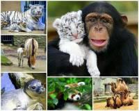 Jak se jmenuje město, ve kterém byla vybudována jedna z nejstarších a nejvýznamnějších zoologických zahrad v ČR, která se proslavila chovem ohrožených zvířat? Někteří z obyvatel této ZOO se na nás dívají z fotografie č.8.  (náhled)