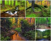 Jak se jmenuje národní přírodní rezervace na obrázku č.5, ve které se vyskytují 400 – 500 let staré stromy? (náhled)