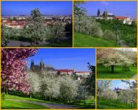 V Praze je mnoho krásných zahrad. K nim se řadí i zahrada na fotografii č.12, která je nejkrásnější v období rozkvetlých ovocných stromů. Jak se zahrada jmenuje? (náhled)