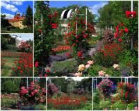 Jak se jmenuje město – místo, kde se nachází Růžový sad na fotografii č.6? (náhled)
