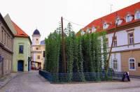 Nejmenší chmelnice na světě na fotografii č.20 se stala symbolem města: (náhled)