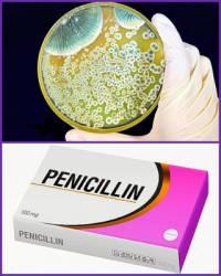 Kterému slavnému vědci se podařilo objevit penicilin? – obrázek č.11 (náhled)