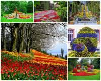 Který květinový klenot je na fotografii č.9? (náhled)