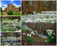 K výjimečným místům v Evropě patří i les na fotografii č.13. Dechberoucí podívaná se naskýtá v únoru, kdy zde rozkvétají bílé koberce sněženek. Unikátní místo se jmenuje: (náhled)