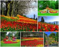 Který květinový klenot je na fotografii č.5? (náhled)