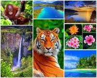 Jak se jmenuje ostrov na fotografii č.2, který je 6. největším ostrovem světa? Ostrov se nachází v západní části souostroví Velké Sundy, protíná ho rovník a velkou část ostrova pokrývá deštný prales. (náhled)