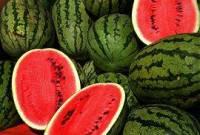 Meloun je .. (náhled)